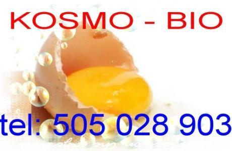 Kurs prastara terapia jajem masaż jajem oraz zdejmowanie ściąganie klątw i uroków Kurs wysyłkowy i s
