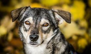 PRINCE - młody, KOCHANY psi MIKRUS - KOTOLUBNY nakolankowy